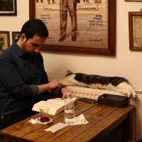 Декабрьский Стамбул: кошка, книжка, горячий чай :: Татьяна [Sumtime]