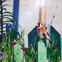 Красивое дополнение к летнему букету! :) :: Елена Хайдукова  ( Elena Fly )