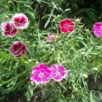 Flowers :: Наталья Абрамова