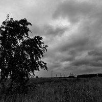 И пасмурно, и ветрено, и дождь. :: Михаил Полыгалов