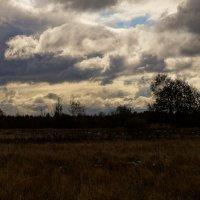 Уж небо осенью дышало... :: Ирина Шурлапова