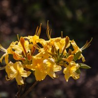 Золотая гроздь :: Андрей Нибылица