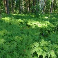 зеленый лес :: ЕР