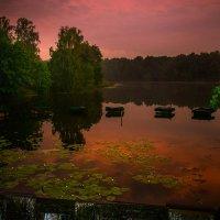 Розовый закат в парке :: Ekko Lie