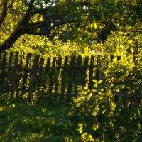 Солнышко в саду. :: Анатолий Нецепляев