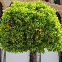 Кому апельсины? Кому витамины? :: Андрей Иванович (Aivanovich-2009)