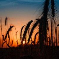 Вечер в поле :: Sergey