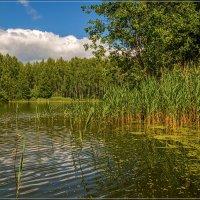 Озеро в лесу 7 :: Андрей Дворников