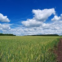 Жизнь подобна полю, где мы должны собрать то, что мы выращиваем, сорняки  или пшеницу.. :: Андрей Заломленков