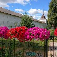 Нарядные живописные петунии Толгского монастыря :: Николай Белавин