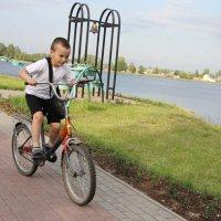 Велосипедист... :: Александр Широнин