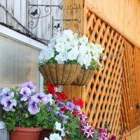 Цветы... :: Александр Широнин
