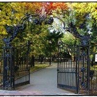 Кованные ворота и ограда в парк ,,Липки,, :: Anatol L