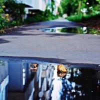 Город после дождя :: Андрей Ананьев