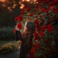 Утро из роз. :: Helena Peshkun