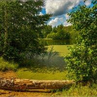 Лесное озеро, июль 2 :: Андрей Дворников