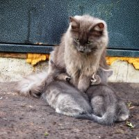 Мама кошка. :: Ильсияр Шакирова