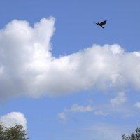 Ворона и облако :: Валерий Самородов