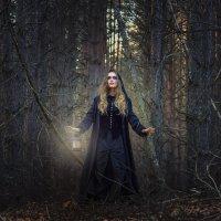 Старый лес. :: Наталья Остапенко