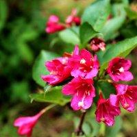 Цветы :: Антонина Гугаева