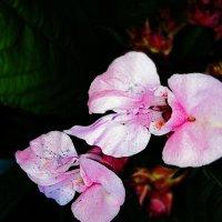 Цветок :: Елена Горбатова