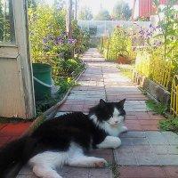 на огороде... :: александр дмитриев