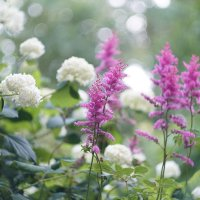 Цветочки :: Андрей Зайцев