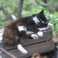 лежбище котика :: Бармалей ин юэй