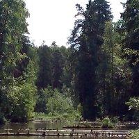 В парке Бернгарда. (Лен.обл). :: Светлана Калмыкова