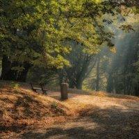 Осенний блюз... :: Elena Ророva