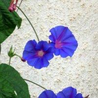 Красивые цветы. :: Валерьян Запорожченко