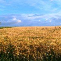 Урожай :: владимир володёнок