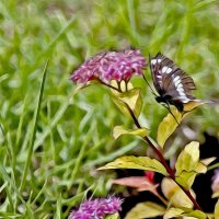 Коричневая бабочка :: Екатерина Торганская