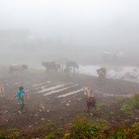 В тумане :: Геннадий Мельников
