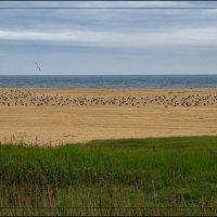 А лета пока нет, на пляже одни только чайки :: Сергей Коваленко