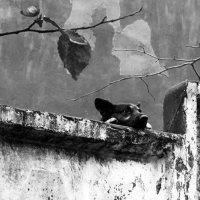 Меланхолия. :: Sergii Ruban