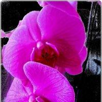 В мире орхидей :: Нина Корешкова