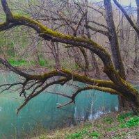 Лесное озеро :: Serega Денисенко