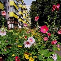 Цветное лето :: Геннадий Худолеев