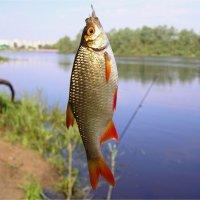С Днём Рыбака дорогие рыбаки и рыбачки :: Геннадий Худолеев