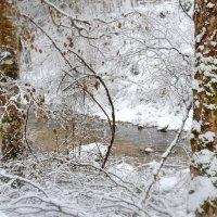 Цвета зимы :: Милана Гиличенски