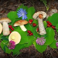 Натюрморты лесные  июльские.. :: Андрей Заломленков