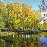 Золотая осень :: Нина Синица