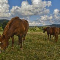 Три коняшки :: Игорь Кузьмин