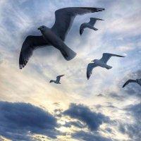 """""""Расскажите птицы времечко пришло, что планета наша хрупкое стекло"""" :: Ирэн"""