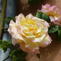 Розы :: Лидия Бусурина