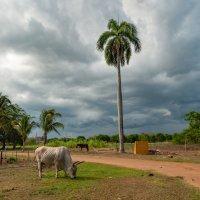 Пейзаж с буйволом :: Владимир Засимов