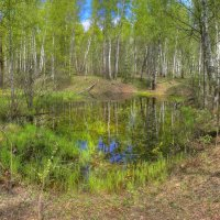 Запрятанный в лесу :: Константин