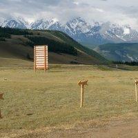 Северо-Чуйский хребет :: Валерий Михмель