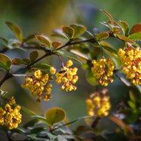 «  Любовь земли и прелесть года, Весна благоухает нам!..» :: Андрей Нибылица